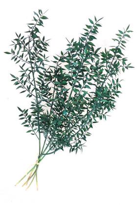Yapay Çiçek Deposu - Şoklanmış Ruscus Aculeatus Kokina Mat Yeşil