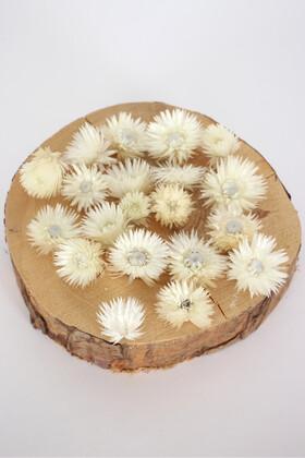 Yapay Çiçek Deposu - Kuru Çiçek Şoklanmış Yıldızcık Çiçeği Beyaz 20 Adet Tek Kafa