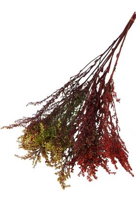 Yapay Çiçek Deposu - Şoklanmıs Solidago Canadensis Solidego Çiçeği Kanada Altınbaşak Kırmızı-Sarı-Yeşil