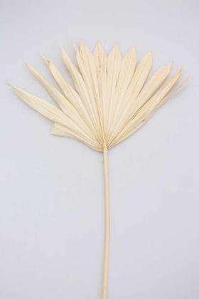 Yapay Çiçek Deposu - Kuru Tropic Palmiye Yaprağı 40 cm Naturel-BEYAZ