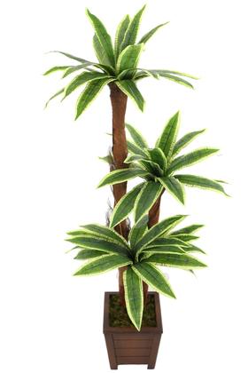 Yapay Çiçek Deposu - Yapay Ağaç 3 Gövdeli Cordyline 160 cm Yeşil-Sarı