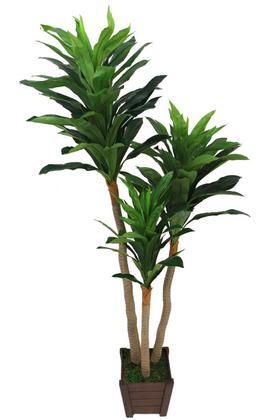 Yapay Çiçek Deposu - Yapay Ağaç Ahşap Saksıda 3 Gövdeli Massengena (Massengena Plant) 190 cm