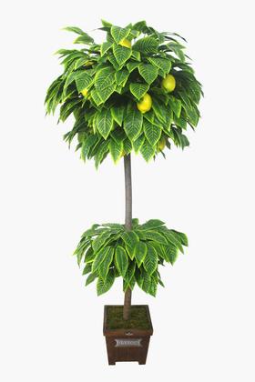 Yapay Çiçek Deposu - Yapay Ağaç Limon Ağacı 180 cm