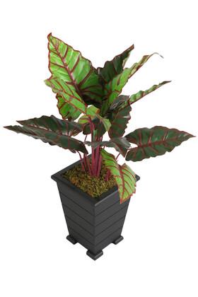Yapay Çiçek Deposu - Yapay Alocasia Bitkisi Ahşap Konik Saksıda 85 cm Yeşil-Kızıl