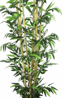 Yapay Bambu Ağacı 6 Gövde 180 cm Model4 - Thumbnail