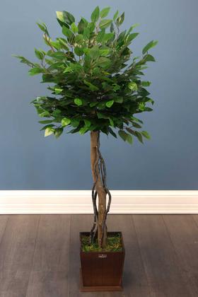 Yapay Çiçek Deposu - Yapay Bodur Benjamin Ağacı 130 cm (Ficus Benjamina)
