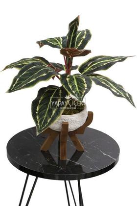 Yapay Çiçek Deposu - Ahşap Ayaklı Beton Saksida Yapay Fittonia Bitkisi Bitkisi 45 cm (Yeşil-Kızıl)