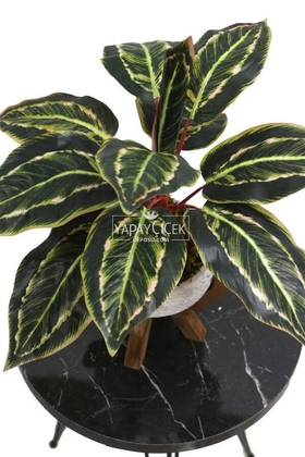 Ahşap Ayaklı Beton Saksida Yapay Fittonia Bitkisi Bitkisi 45 cm (Yeşil-Kızıl) - Thumbnail