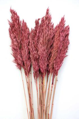Yapay Çiçek Deposu - Şoklanmış Bodur Pampas Küçük Püsküllü 10lu 55cm Kiremit Kırmızı