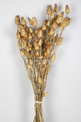 Yapay Çiçek Deposu - Kuru Çiçek Güllüşah Otu Demeti Doğal