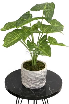 Yapay Çiçek Deposu - Yapay Çiçek Beton Saksıda10 Dallı Lüx Difenbahya Bitki 42cm