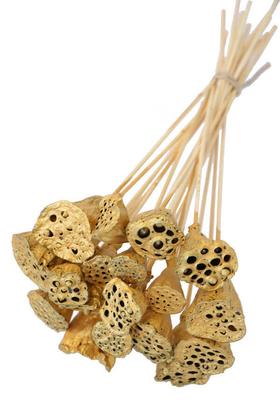 Yapay Çiçek Deposu - 20 Adet Bambu Şiş Saplı Mini Lotus Plant GOLD (Gerçek Lotus)
