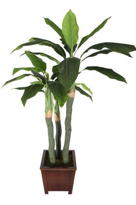 Yapay Çiçek Deposu - Yapay Kaliteli Ağaç 3 Gövdeli Massengena (Massengena Plant) 155 cm