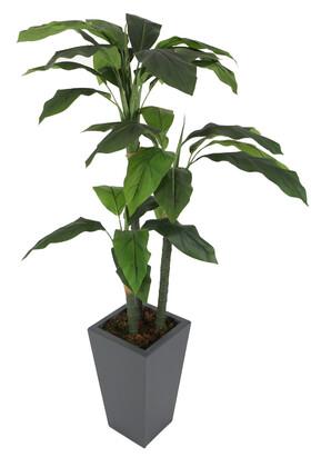 Yapay Çiçek Deposu - Yapay Ağaç 3 Gövdeli Massengena (Massengena Plant) 180 cm