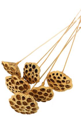 Yapay Çiçek Deposu - Succulent Lotus Plant Gerçek Lotus Çiçeği Bambu Saplı 6 Adet Gold Altın Renk