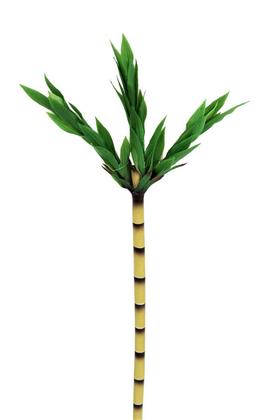 Yapay Çiçek Deposu - Yapay Plastik Şans Bambusu 90 cm