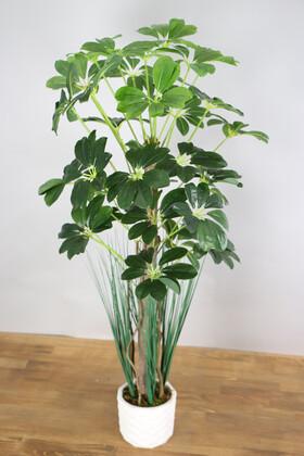 Yapay Çiçek Deposu - Yapay Şeflera Ağacı 105 cm Beton Saksılı Koyu Yeşil