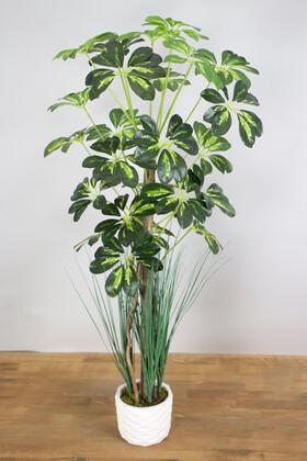 Yapay Çiçek Deposu - Yapay Şeflera Ağacı 105 cm Beton Saksılı Yeşil-Sarı