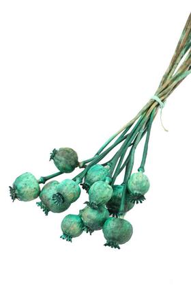Yapay Çiçek Deposu - Kuru Çiçek Papaver Otu Yeşil