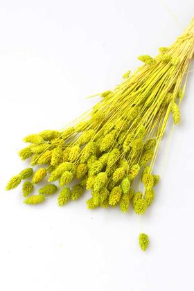Yapay Çiçek Deposu - Kuru Çiçek Palaris Kuş Otu Fıstık Yeşili