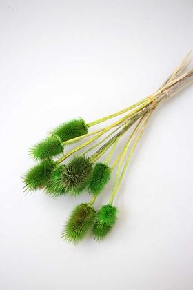 Yapay Çiçek Deposu - Kuru Çiçek Limon Dikeni Yeşil