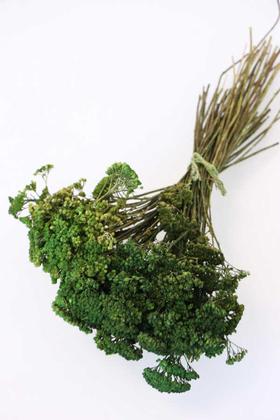 Yapay Çiçek Deposu - Kuru Çiçek Ayva Denesi Demeti Yeşil