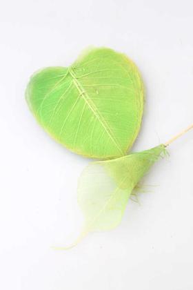 Yapay Çiçek Deposu - 25li Paket Kurutulmuş Skeleton Yaprağı Yeşil