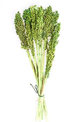 Yapay Çiçek Deposu - Kuru Çiçek Sorghum Otu 55 cm Yeşil
